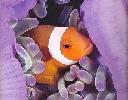 ocean-colour-scene-314738.jpg
