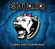 bijouterrier-340129.jpg