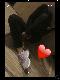 Skrill_girl