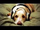 musicguy-1174943.jpg