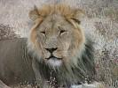 king-africa-204087.jpg