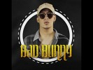 bad-bunny-591307.jpg